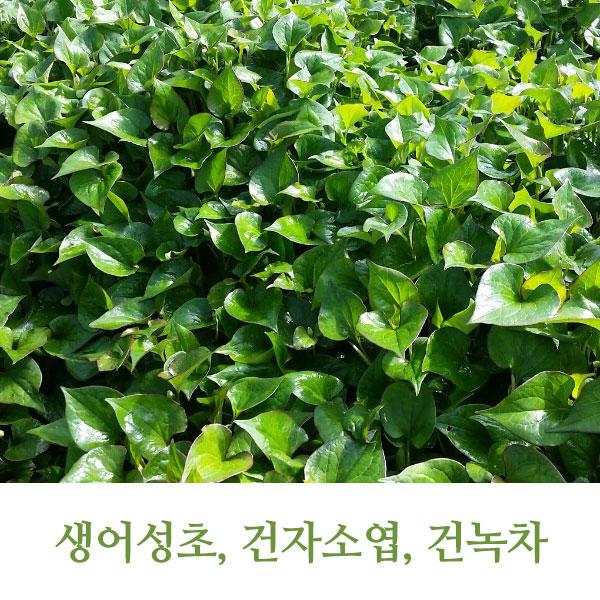 푸르른나래영농조합법인/예산/생어성초1kg, 5kg, 어성초세트(어성초,건자소엽,건녹차)